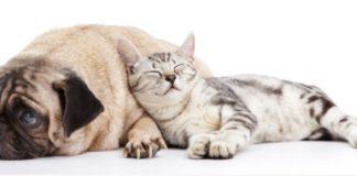 Pet friendly mobile home parks