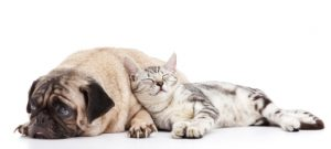 pets for mobile homes