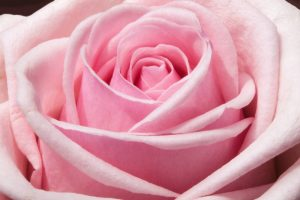 Use flowers for decorating your manufactured home