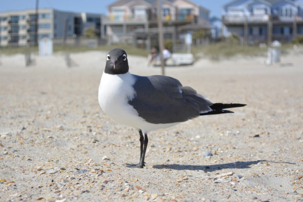 Newport NC Top Cities for Mobile Homes