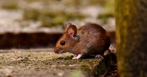 Pests Mouse Fall Mobile Home Checklist