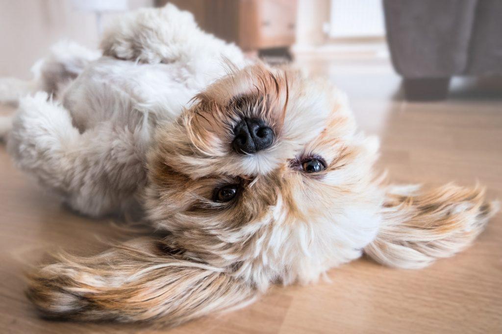 perfect florida retirement community pet friendly dog