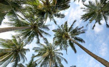 Sunny palms perfect florida retirement community