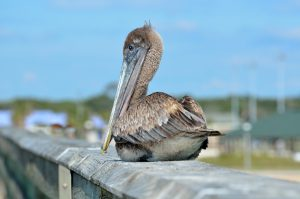 Pelican piere perfect florida retirement community